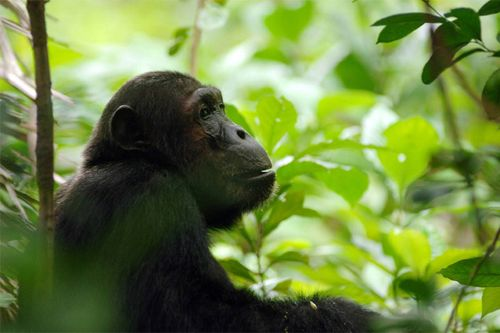 Rwanda1005_001u