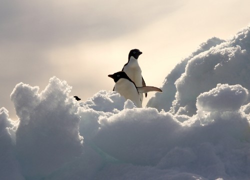 http://concierge.typepad.com/photos/uncategorized/2007/04/02/antarctica_penguins.jpg