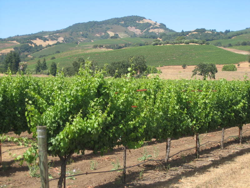 Vineyard_and_hills