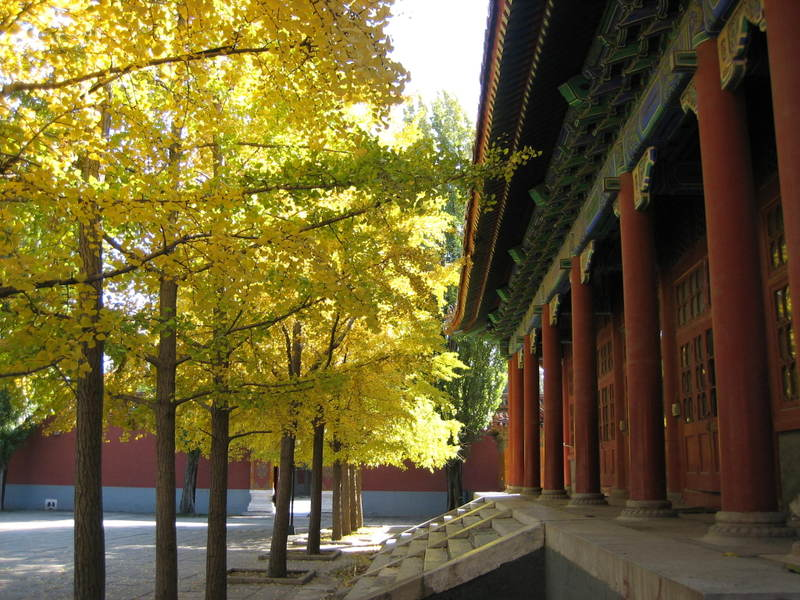Fall_leaves_at_beijing_childrens_pa