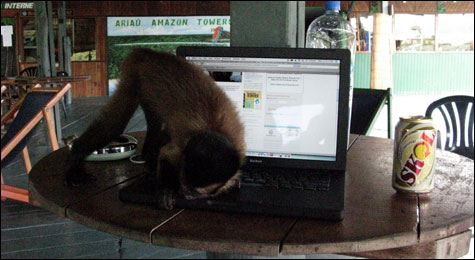 Capuchin_gene_pp