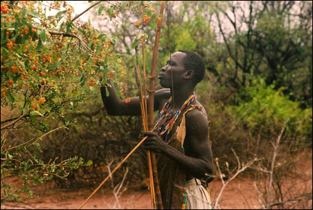 Berry_picking_in_tanzania_2